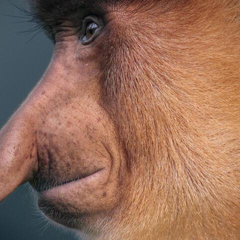 Humanizar a los animales para salvarlos de la extinción