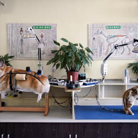 Acupuntura para perros y gatos
