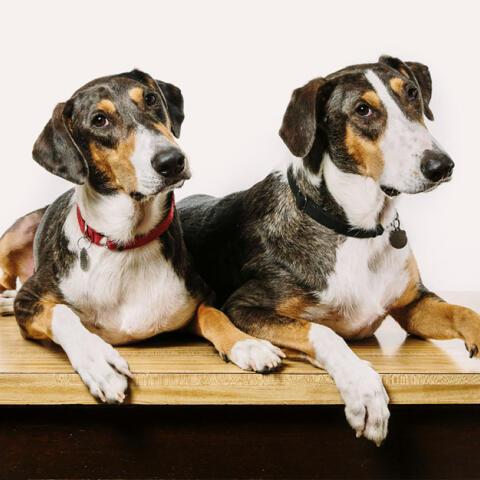 Sí, podemos clonar ya a nuestra mascota